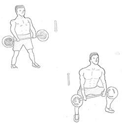 Biceps-Sumo Deadlift