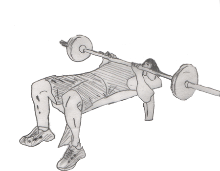 Barbell Bench Press targets your Pectoralis Major, Sternal muscles with dynamically Stabilize your Biceps Brachii, Short Head.
