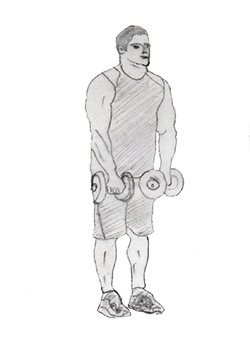 Dumbbell Front Raise targets your Dumbbell Front Raise(shoulder), Upper trapezius(upper back) and also your triceps. Gives you a perfect shoulder shape.