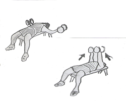 Chest-Dumbbell Fly